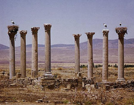 Storks nesting on the columns of the church ruins at Timgad, in the Batna area of Algeria
