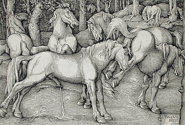 Hans Baldung Grien Stallion and Kicking Mare with Wild Horses