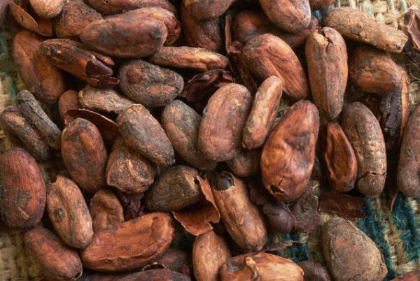 Cocoa Beans with Outer Hulls