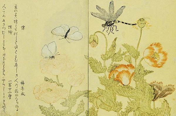A Picture Book of Selected Insects by Utamaro ca. 1788