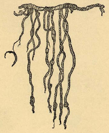 The Quipu, Employed by the ancient Peruvians for record-keeping and calculating